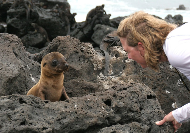 A young Galápagos Sea Lion, Marine Iguanas in the background, in Bahia Fe, Santa Cruz Island.
