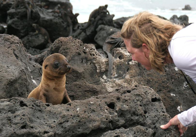 A young Galápagos Sea Lion, Marine Iguanas in the background, in Bahia Fe, Santa Cruz Island.