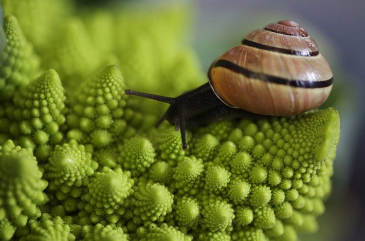 Spirals the brocoli and the snail