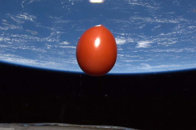 "This is a tomato orbiting Earth: ""It's a snap from Japanese astronaut Koichi Wakata aboard the International Space Station. He tweeted the photo writing: ""One fresh tomato for dinner makes us happy in space. It came up with us on Soyuz TMA-11M."""