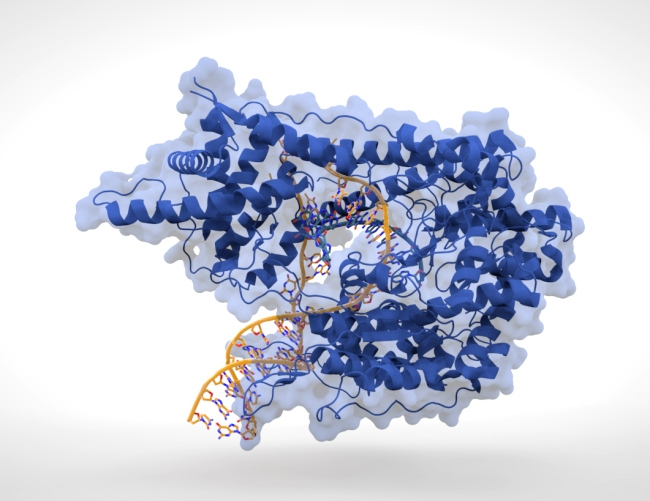 Remember this Mother's Day to give thanks to your mom for this enzyme.