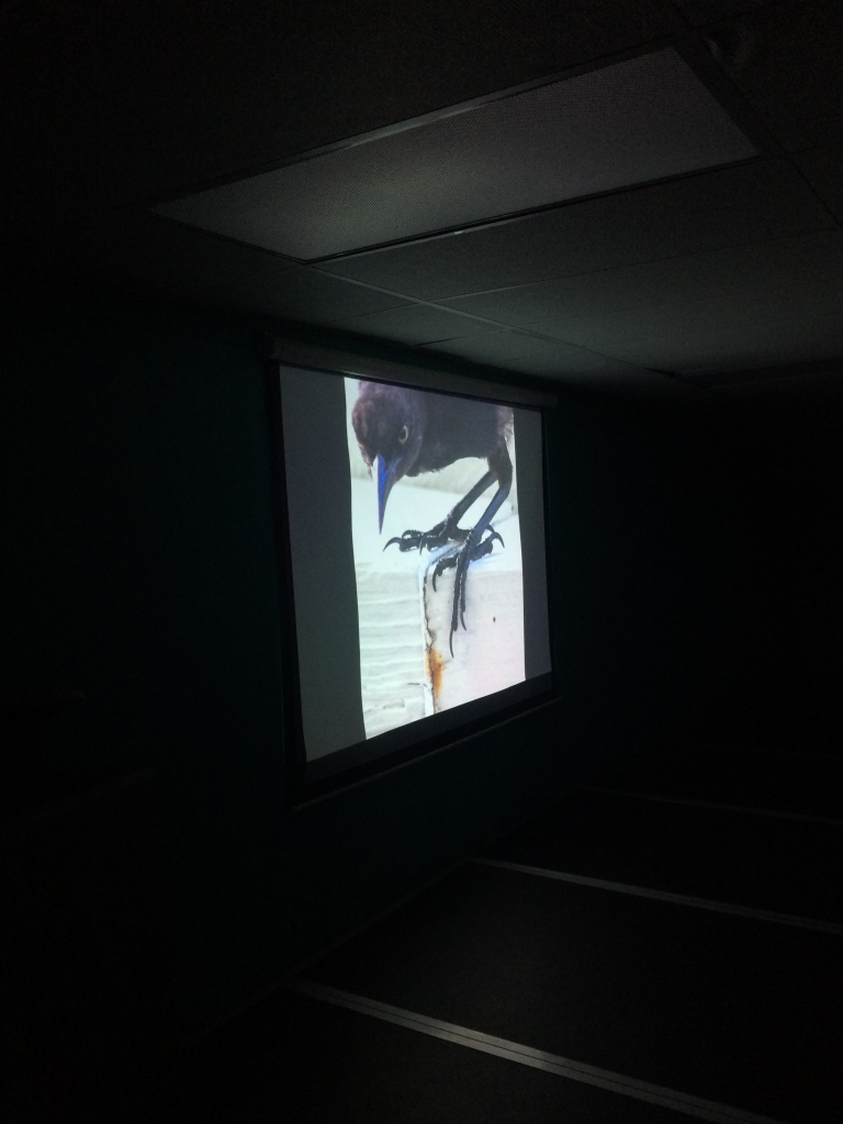 Careful observations of the legs of this bird show that birds and dinosaurs share common ancestry.